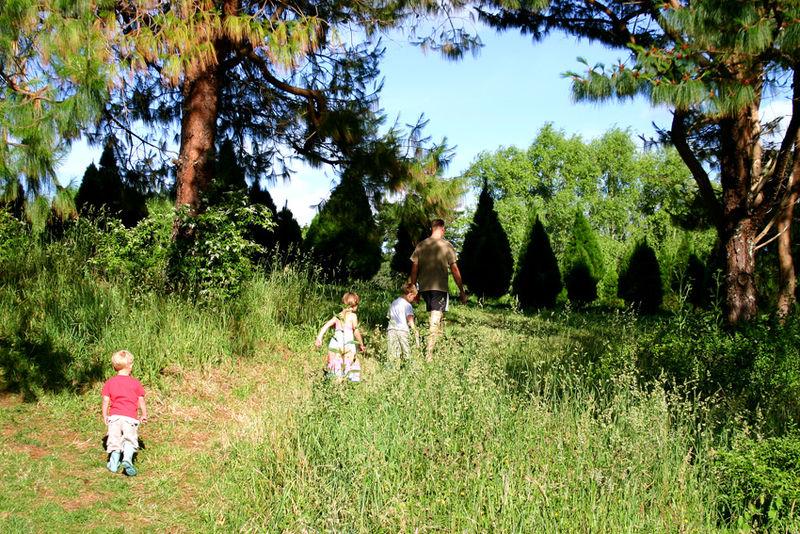 Xmas tree picking 72dpi