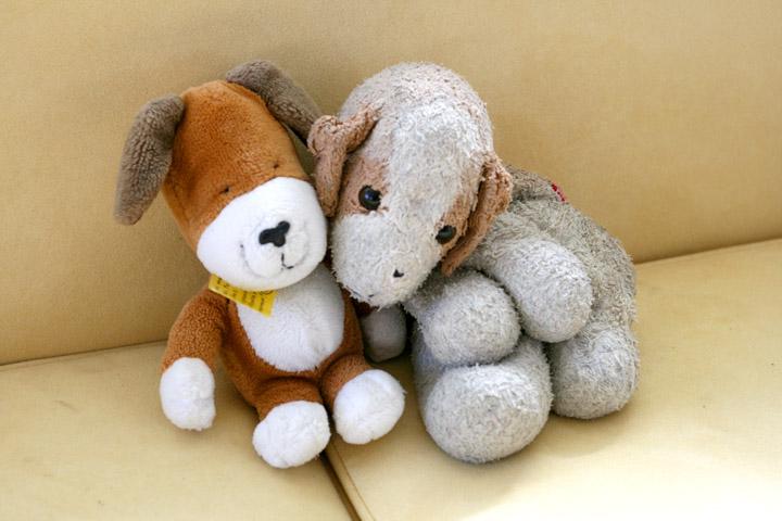 Kipper and dog 72dpi