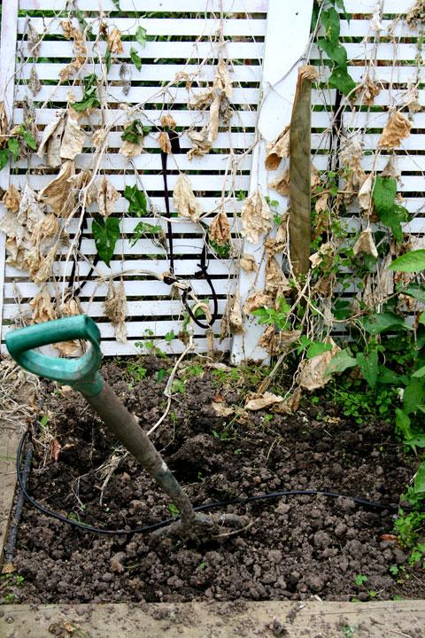 End-of-summer-garden