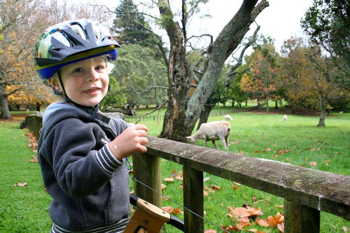 Dan-cornwall-park-sheep
