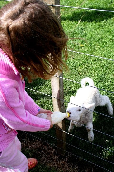 Ambury-farm-sarah-feeding-s