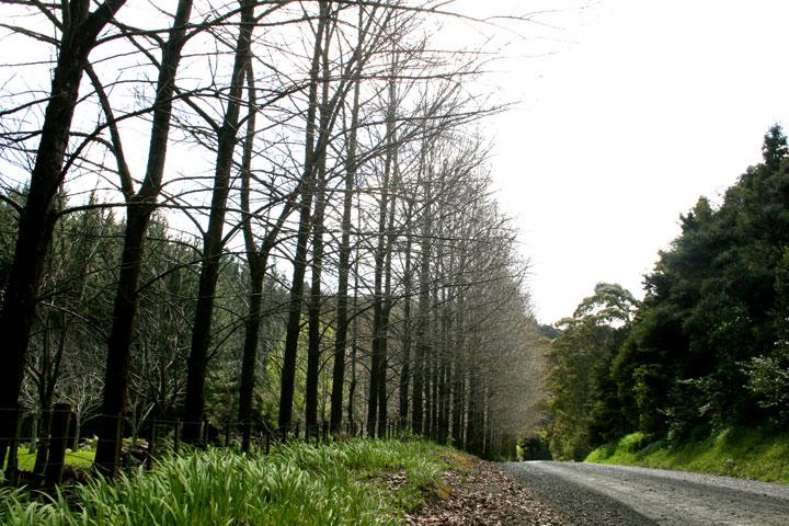 Back-roads
