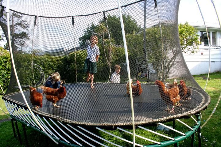 Chickens-on-tramp