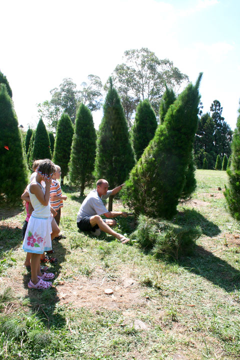 Cutting-our-tree-2010