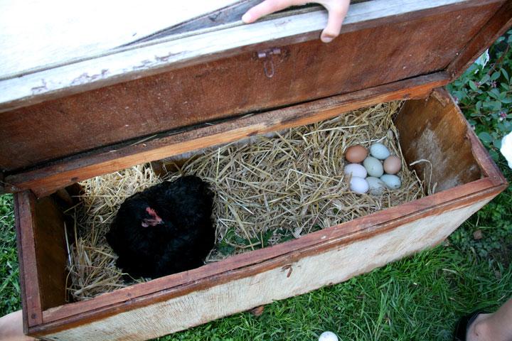 Eggs-settled