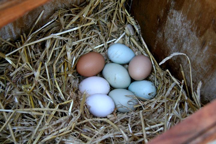 Eggs-settled-2