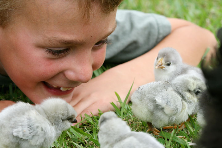 Chicks-visiting-matt4