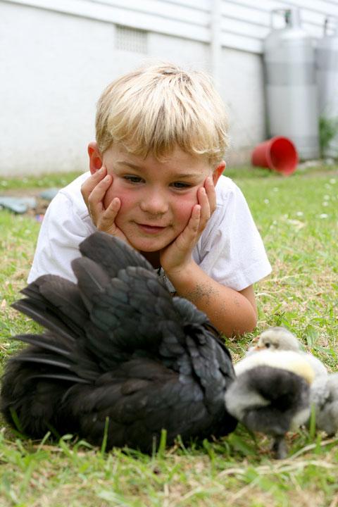 Chick-watching-dan
