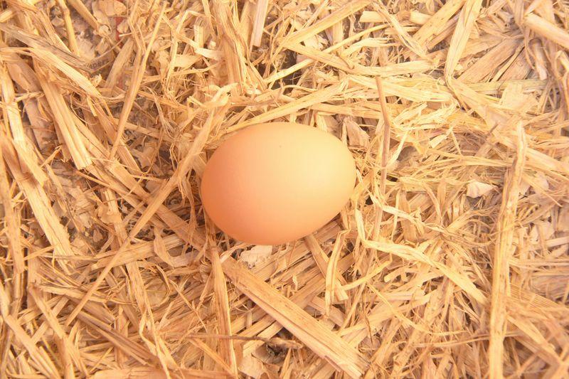 Sunshines-egg