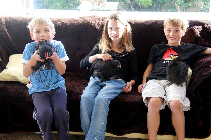Kids-and-chooks