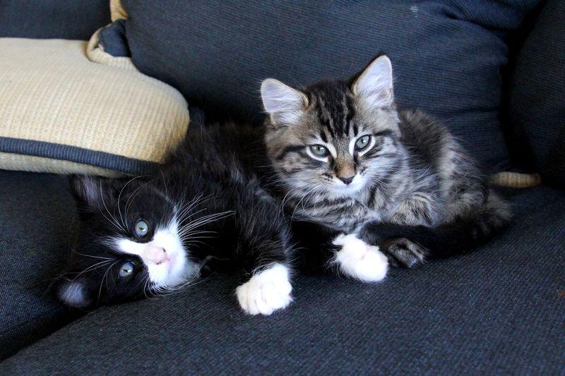 Kittens-