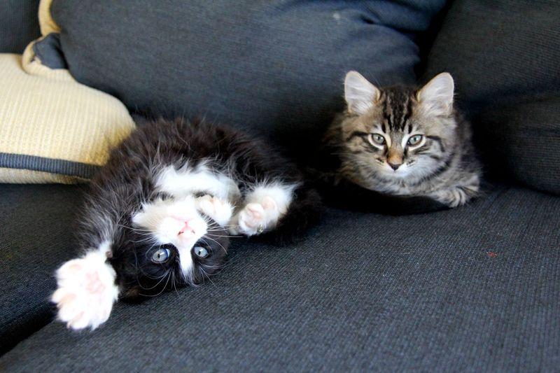 Kittens1-