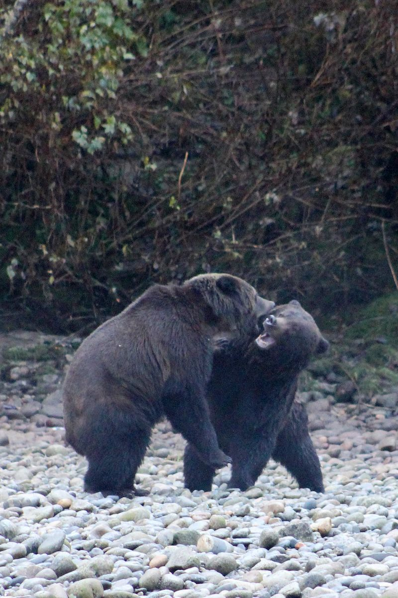 Bears 38