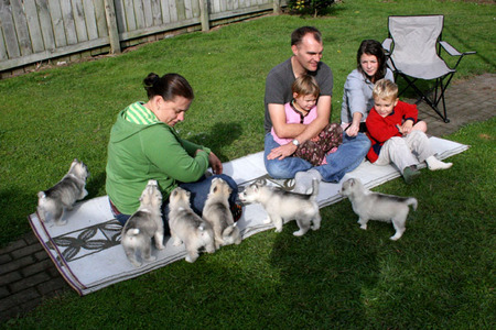 Puppies_and_people_72dpi