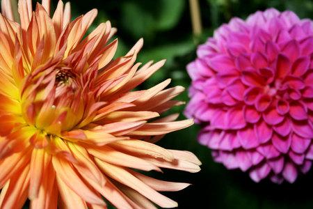 Doubleflowersfw