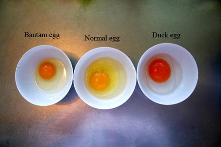Eggs_broken_shell_72dpi