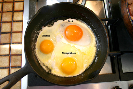 Eggs_cooking_72dpi