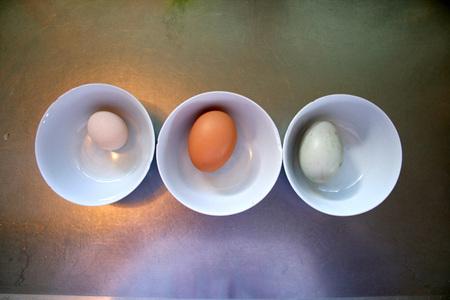 Eggs_in_shells_72dpi
