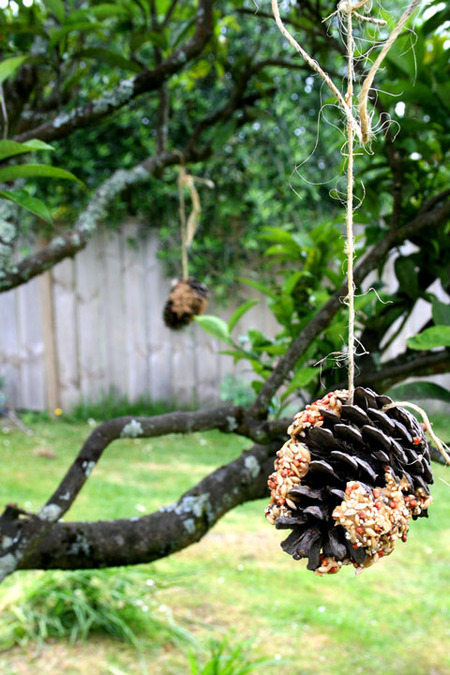 Bird_feeding_pinecones_72dpi