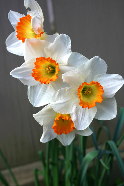Daniels_spring_flowers_72dpi